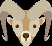 Argalis (tête)